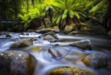 Taggerty River, Victoria, Australia